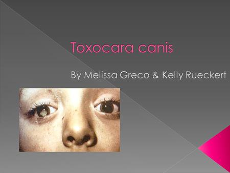 Order: Ascaridida › Family: Toxocarida › Genus: Toxocara › Species: T. canis  Geography: Worldwide.