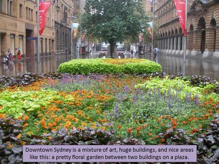 Downtown Sydney is a mixture of art, huge buildings, and nice areas like this: a pretty floral garden between two buildings on a plaza.
