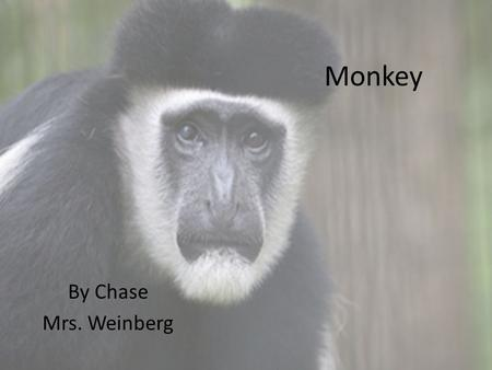 Monkey By Chase Mrs. Weinberg.