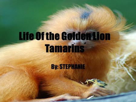 Life Of the Golden Lion Tamarins By: STEPHANIE. Table of Contents.