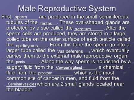 Male Reproductive System First, ________ are produced in the small seminiferous tubules of the ______. These oval-shaped glands are protected by a sac.