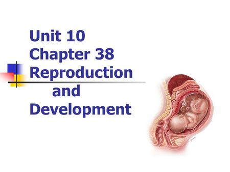 Unit 10 Chapter 38 Reproduction and Development. Human Male Anatomy Testes Male gonads: produce male gametes & male hormones Suspended outside body in.