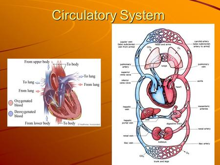 Circulatory System. Vocabulary Lesson 5 1. plasma – the clear, light- yellow liquid that makes up most of your blood 2. hemoglobin – a substance in.
