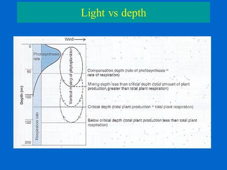 Light vs depth. Productivity vs depth Productivity vs Light PG – Gross Primary Productivity PN – Net Primary Productivity R - Respiration Pmax – maximal.