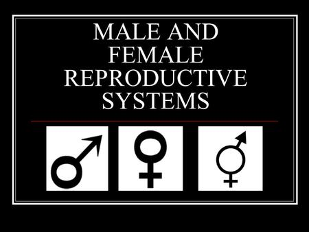 MALE AND FEMALE REPRODUCTIVE SYSTEMS. MALE - Testosterone Seminal Vesicle Vas Deferens Prostate Gland Penis Urethra Foreskin Bulbo-Urethral Gland (Cowper's.