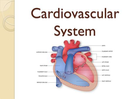 Cardiovascular System Health. Cardiovascular System Why is it called a transport system? 1. Transportation of fuel -carries food and oxygen to cells 2.