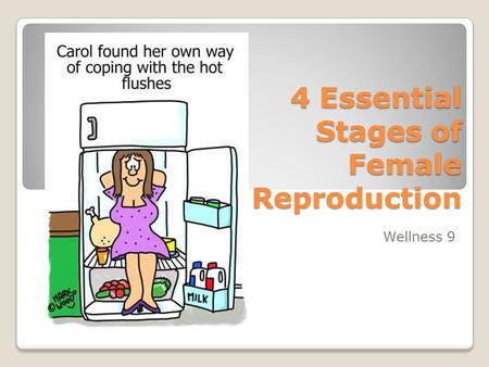 4 Essential Stages of Female Reproduction