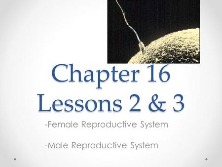 Chapter 16 Lessons 2 & 3 -Female Reproductive System -Male Reproductive System.