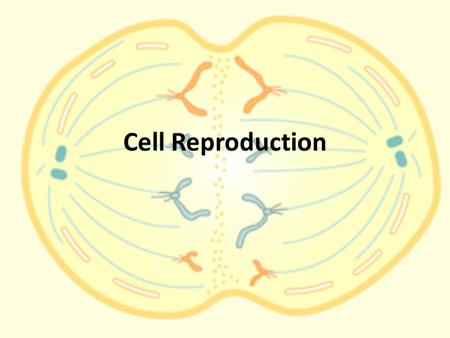 Cell Reproduction. Cells Your body is made of between 10 to 100 trillion cells About one thousandth of them die every day.