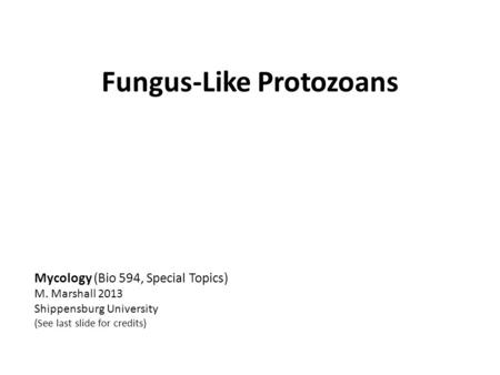 Fungus-Like Protozoans Mycology (Bio 594, Special Topics) M. Marshall 2013 Shippensburg University (See last slide for credits)