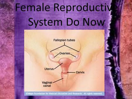 Female Reproductive System Do Now. Female Reproductive System 1. An important job of the female reproductive system is to produce mature eggs 2. The ovaries.