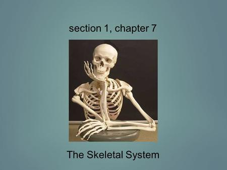 Section 1, chapter 7 The Skeletal System.