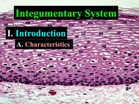 Integumentary System I. Introduction A. Characteristics.
