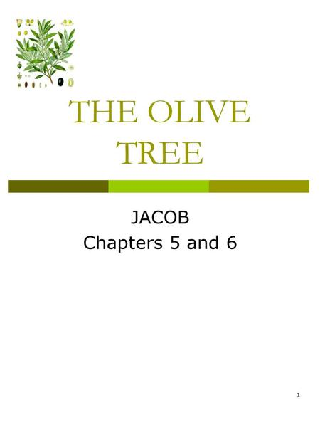 THE OLIVE TREE JACOB Chapters 5 and 6 1. ROSE BUD UNION.