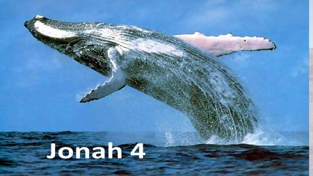What kind of prophet was Jonah????? Jonah's confession saved the sailors Jonah's prophecy saved Ninevah Only Jonah needs saving in 4.