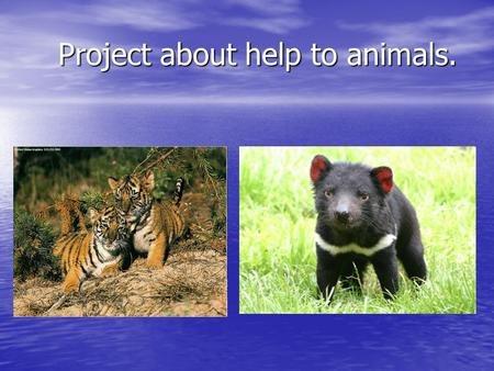 Project about help to animals. Project about help to animals.
