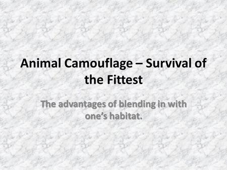 Animal Camouflage – Survival of the Fittest The advantages of blending in with one's habitat.