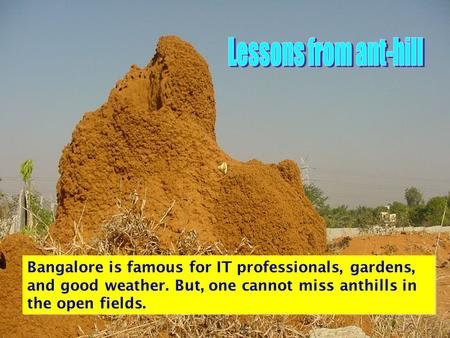 Bangalore is famous for IT professionals, gardens, and good weather. But, one cannot miss anthills in the open fields.
