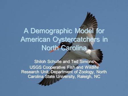 A Demographic Model for American Oystercatchers in North Carolina Shiloh Schulte and Ted Simons USGS Cooperative Fish and Wildlife Research Unit, Department.