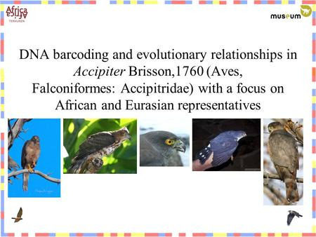 DNA barcoding and evolutionary relationships in Accipiter Brisson,1760 (Aves, Falconiformes: Accipitridae) with a focus on African and Eurasian representatives.
