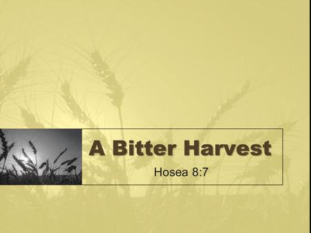 "A Bitter Harvest Hosea 8:7. Sowing Your Wild Oats The reckless living of a young person is often described as ""sowing your wild oats"" Many in society."