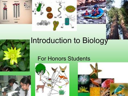 Introduction to Biology For Honors Students. The Golden Rule Treat thy neighbor as thyself. Do unto others as you would have them do unto you As you.
