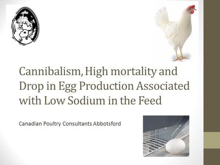 Cannibalism, High mortality and Drop in Egg Production Associated with Low Sodium in the Feed Canadian Poultry Consultants Abbotsford.