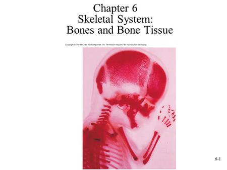 Skeletal System: Bones and Bone Tissue