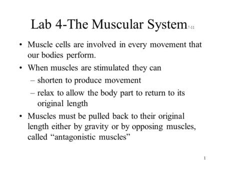 1 Lab 4-The Muscular System 7-11 Muscle cells are involved in every movement that our bodies perform. When muscles are stimulated they can –shorten to.