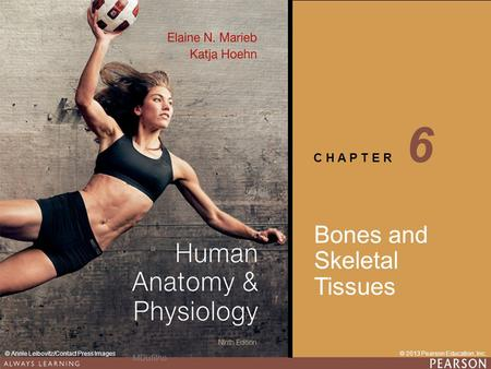 C H A P T E R © 2013 Pearson Education, Inc.© Annie Leibovitz/Contact Press Images Bones and Skeletal Tissues 6 MDufilho.