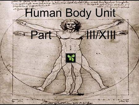 Human Body Unit Part III/XIII. Human Body Unit Part III/XIII.