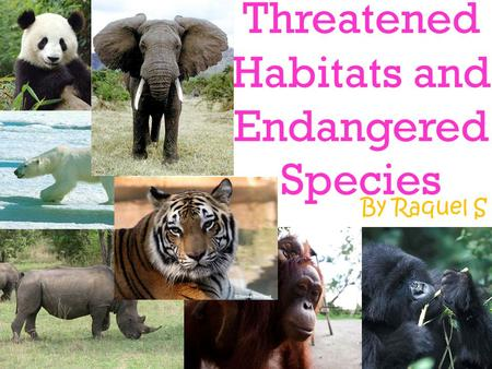 Threatened Habitats and Endangered Species By Raquel S.