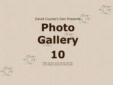 David Coyote's Den Presents Photo Gallery 10 Slides advance at 20 second intervals, or by clicking anywhere on the screen.