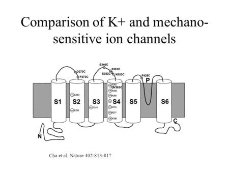 Comparison of K+ and mechano- sensitive ion channels Cha et al. Nature 402:813-817.