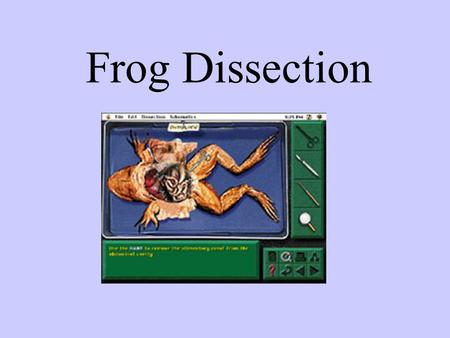 Frog Dissection.