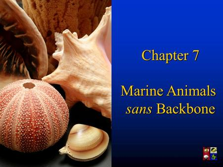 Chapter 7 Marine Animals sans Backbone. Where are we in geologic time? So are, we've moved from bacteria to plankton, and through some alage (seeweed).