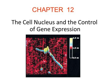 The Cell Nucleus and the Control of Gene Expression