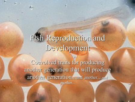 Fish Reproduction and Development Coevolved traits for producing another generation that will produce another generation... and another... and another...