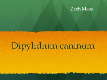 Dipylidium caninum Zach Mess. Taxonomy KINGDOM  Animalia KINGDOM  Animalia PHYLUM  Platyhelminthes PHYLUM  Platyhelminthes CLASS  Cestoda CLASS 