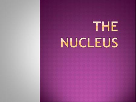  The nucleus (pl. nuclei; latin nucleus or nuculeus, meaning kernel) is a membrane-enclosed organelle found in eukaryotic cell.  It contains most of.