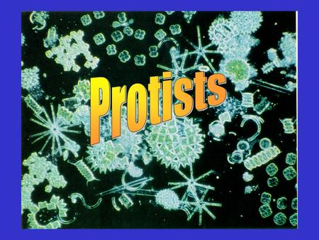 Protists. Kingdom: Protista 2 general categories2 general categories –______-like protists.