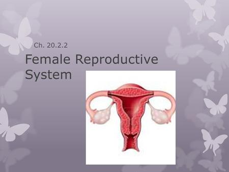 Female Reproductive System Ch. 20.2.2. Female Reproductive System  The role of the female reproductive system is to produce eggs  If an egg is fertilized,