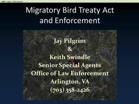 Migratory Bird Treaty Act and Enforcement Jay Pilgrim & Keith Swindle Senior Special Agents Office of Law Enforcement Arlington, VA (703) 358-2426.