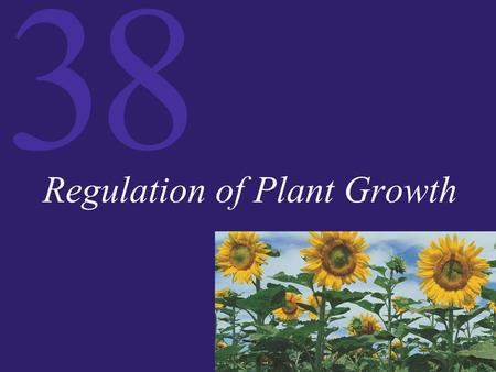 38 Regulation of Plant Growth. 38 Interacting Factors in Plant Development The development of a plant is regulated by four factors:  Plants sense and.
