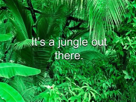 It's a jungle out there. IT Governance A 2009 Competitive Advantage.