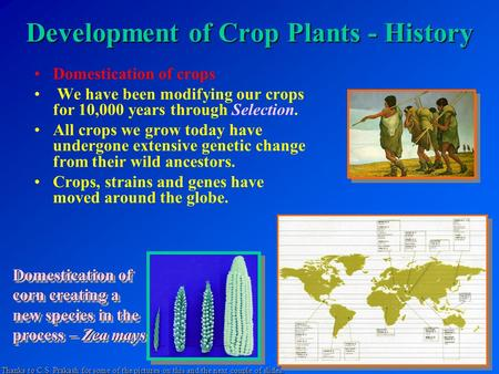 Development of Crop Plants - History Domestication of crops We have been modifying our crops for 10,000 years through Selection. All crops we grow today.