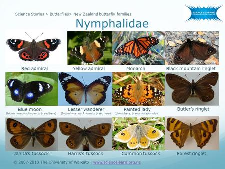 © 2007-2010 The University of Waikato | www.sciencelearn.org.nzwww.sciencelearn.org.nz Science Stories > Butterflies> New Zealand butterfly families Nymphalidae.