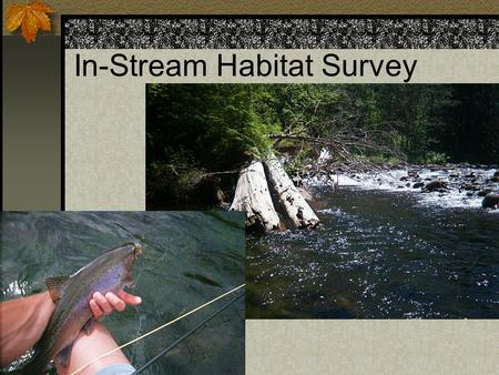 In-Stream Habitat Survey