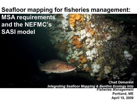 Seafloor mapping for fisheries management: MSA requirements and the NEFMC's SASI model Chad Demarest Integrating Seafloor Mapping & Benthic Ecology Into.