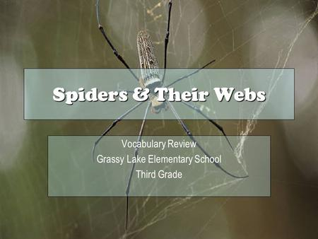 Spiders & Their Webs Vocabulary Review Grassy Lake Elementary School Third Grade.